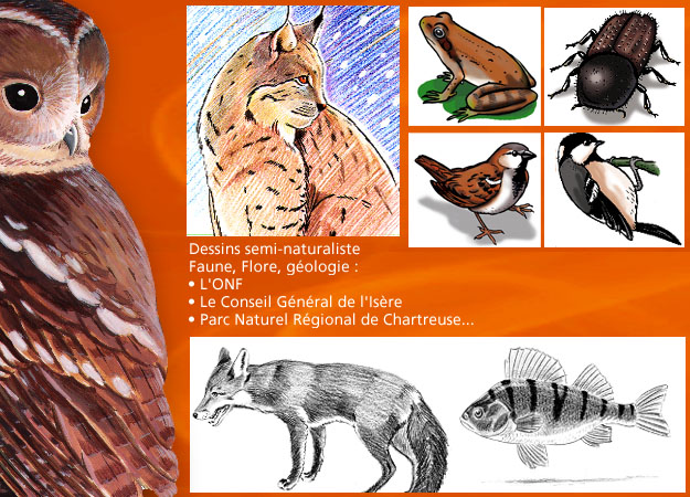 Dessins animaliers semi naturalistes